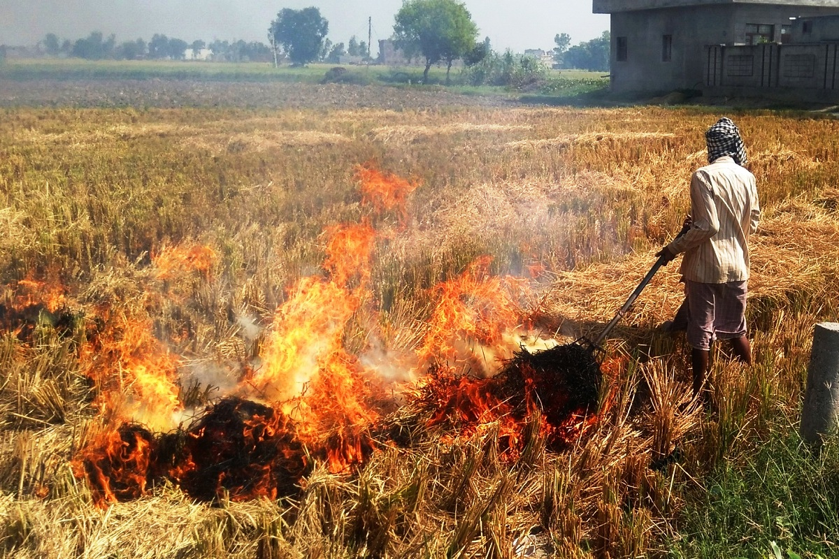 paddy burning, Punjab, Haryana, air pollution, Commission for Air Quality Management, CAQM