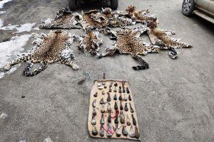 Wildlife Crime Control Bureau busts wildlife trafficking syndicates in Jammu and Kashmir