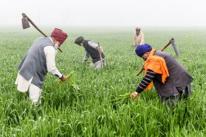Govt may increase farm credit target to about Rs 19 trillion in Budget 2021-22