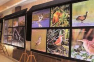 3rd National Chilika Bird Festival takes flight