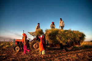 Need to see agriculture as modern biz enterprise; urgent reforms required:Eco Survey