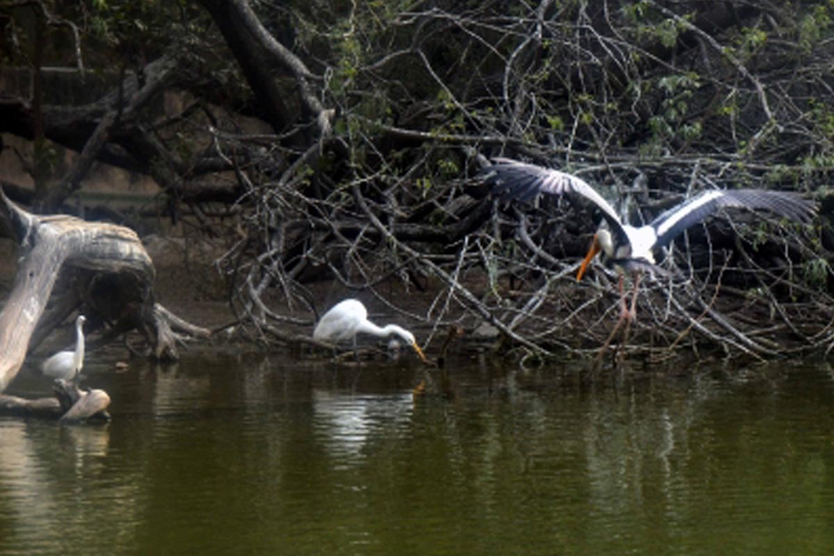 Delhi zoo, bird flu