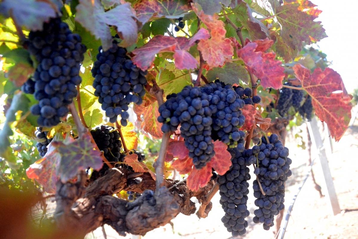 grapes, skincare