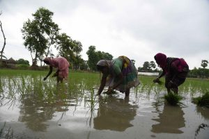 How India's rice yield can adapt to climate change challenges
