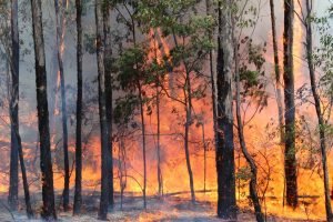 Odisha forest fires: Centre to send expert panel