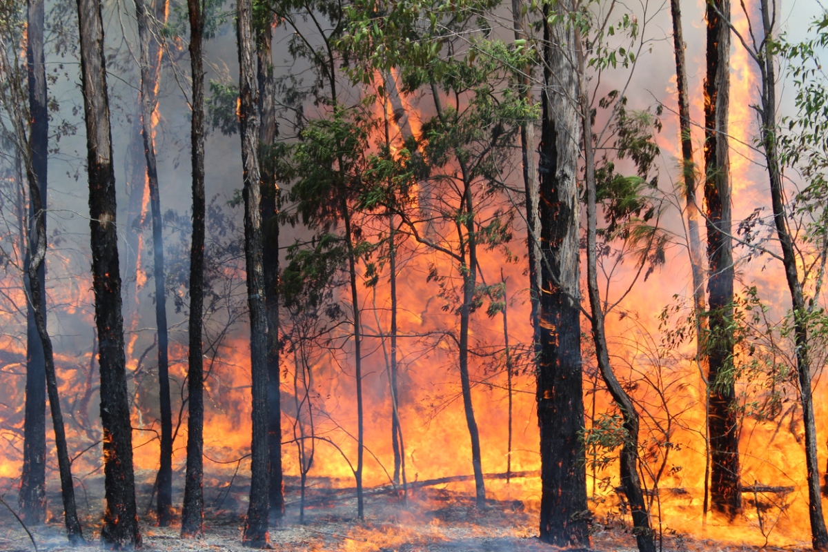 Odisha, Similipal National Park, forest fire, Union Forest Minister
