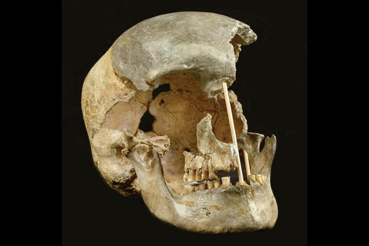 Modern Skull