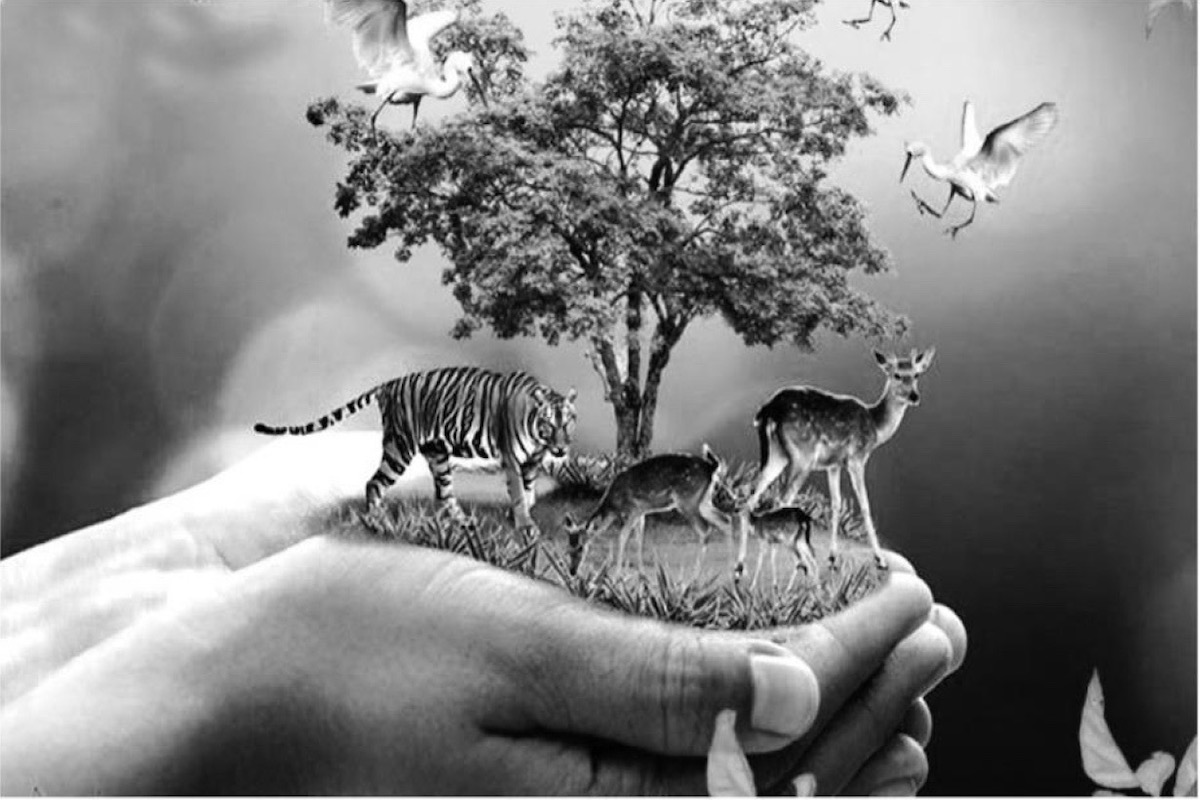 Conservation Lenses and Wildlife (CLaW), environment, conservation efforts, forest fire,