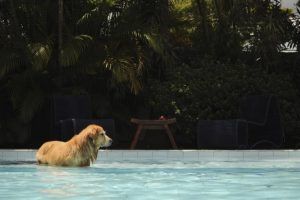 Here's how swimming can benefit dogs