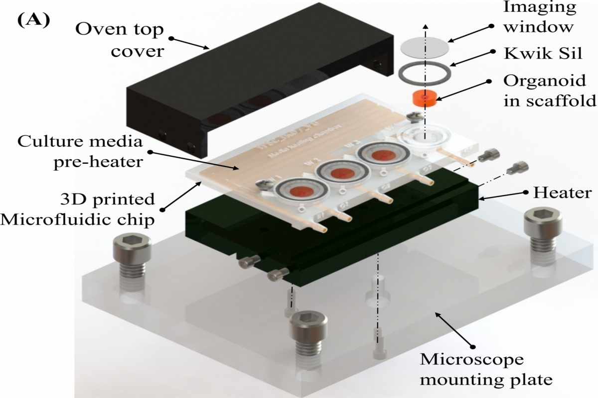 The novel 3D printed micro-incubator and imaging chamber was made into a single palm-sized platform, which was successfully demonstrated for long-term human brain cells culture and real-time imaging.