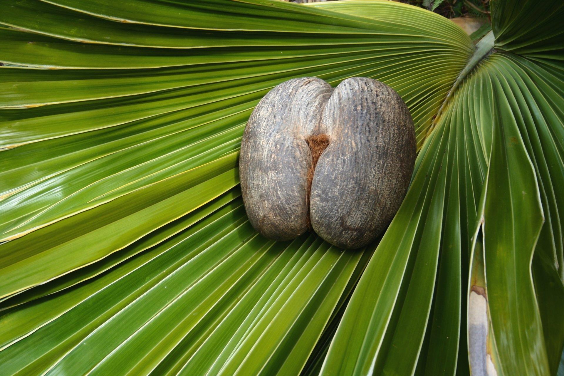 Seychelles, Island-hopping, getaway