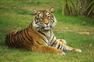 Focus on Sundarbans~I