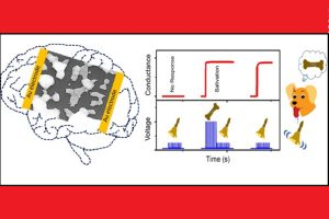 Indian scientists develop efficient Artificial Synaptic Network that mimics human brain
