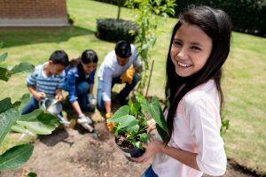 Delhi govt to plant 33L saplings of trees and shrubs: Gopal Rai