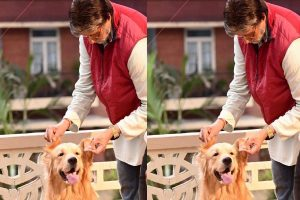 Amitabh Bachchan shares picture posing with his 'co-star'