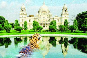 If the Sundarbans fall, Kolkata will be next