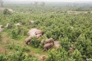 Odisha to tag problematic tuskers with radio collars to check human-elephant conflict