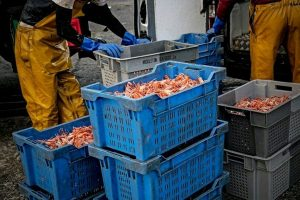 EU Council approves deal with UK on fishing opportunities