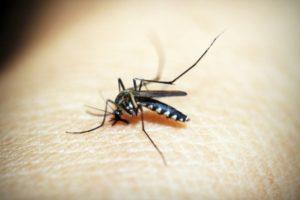 158 dengue cases reported in Delhi during Jan-Sep 2021