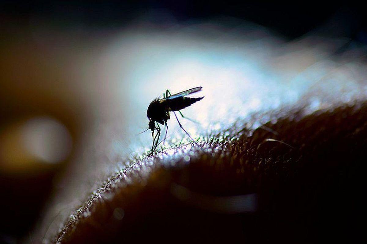 Dengue, Spreads, Wings, Bhubaneswar, positive cases