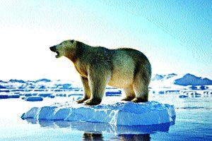 Arctic squabbles must end to ensure eco-balance
