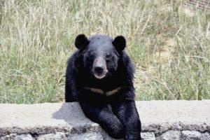 3 injured in bear attack in J&K's Sonamarg