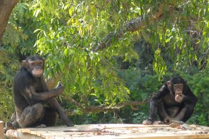 More animals in SL zoo suspected to have contracted Covid