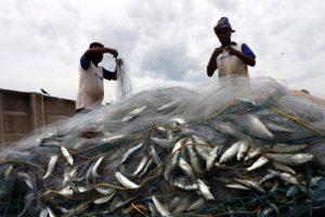 Fishermen to meet Tamil Nadu CM over Indian Marine Fisheries Bill