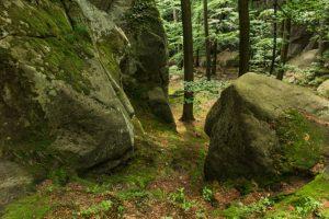 Forest dept. cracks down on boulder smugglers
