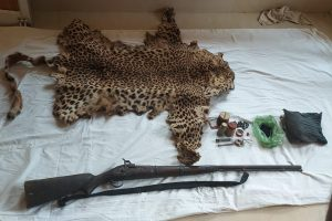 Leopard skin, arms seized in Odisha: One arrested