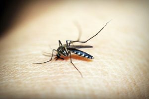 Central team rushed to Maharashtra after Zika report