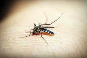 Bhopal district reports 107 dengue cases