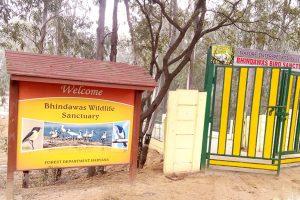 Haryans's Sultanpur & Bhindawas get Ramsar sites tag