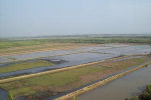 Orissa High Court orders immediate satellite proofing of prawn dykes, hatcheries in Chilika, Bhitarkanika
