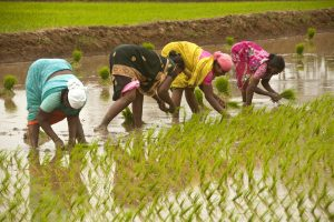 Centre asks states to spend 30 % funds of agriculture welfare schemes on women farmers