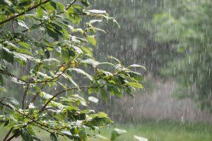 Rain forecast brings hopes for Odisha farmers
