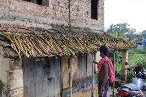 Shola cultivators in Bengal incur huge losses