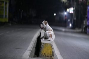 Chennai Corporation to sterilise 80,000 stray dogs