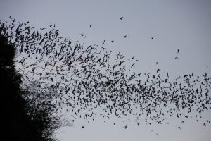 'China planned to release enhanced coronavirus in bat caves in 2018'