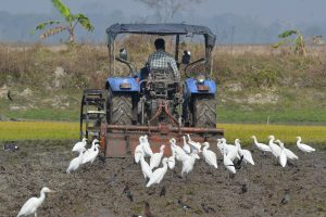 Reconfigure agricultural producer support: UN report