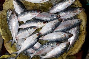 B'desh increases consignment of hilsa export but reduces number of days
