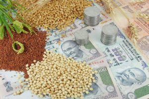 Guar seed futures rise on fresh bets