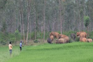 Doubts linger over radio-collaring of wild elephants in Odisha after the Chhattisgarh fiasco