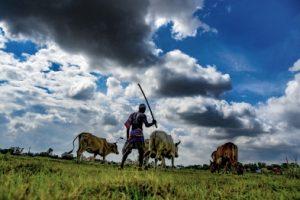 Farm subsidies distort prices, degrade environment: UN