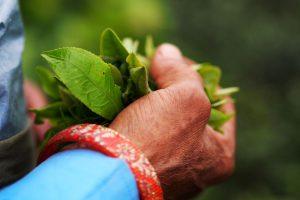 Hill TMC MP writes to Centre on Nepal tea row