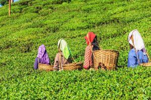 Hill tea puja bonus row: Trade unions to write to CM
