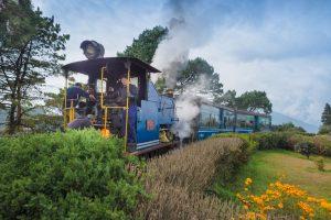Toy Train's Jungle Tea Safari picks up steam