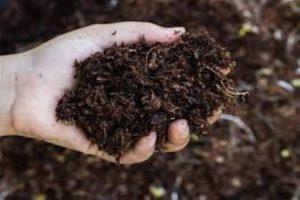 After ban on Chinese organic fertiliser, Sri Lanka turns to India