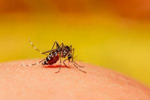 Rajasthan cancels leaves of medical staff after dengue cases rise