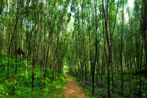 Govt proposes amendment to Forest Act for accelerated integration of 'conservation and development'